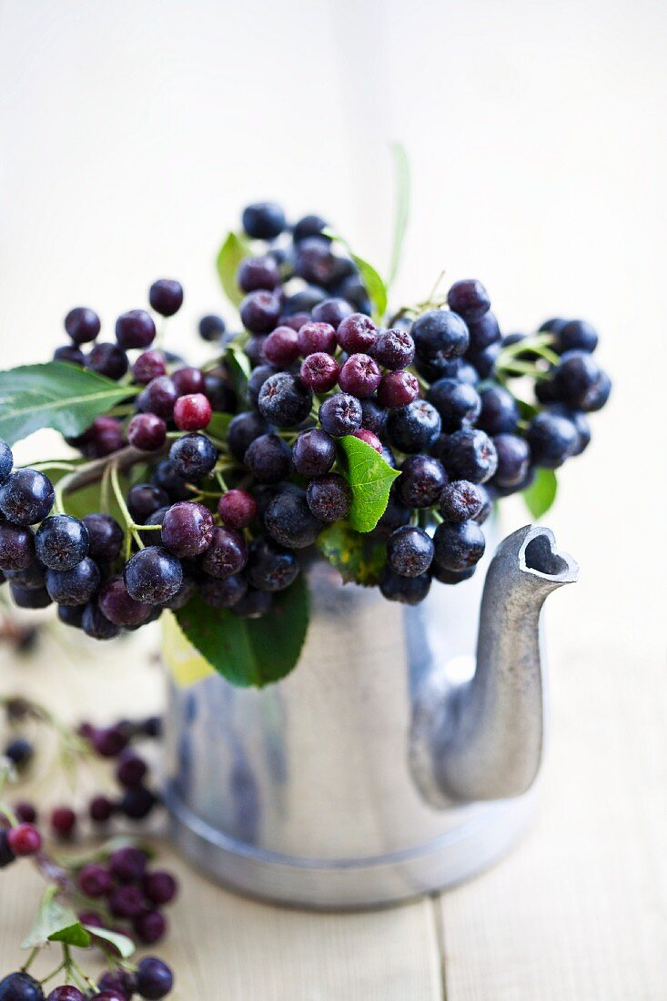 A bunch of aronia berries