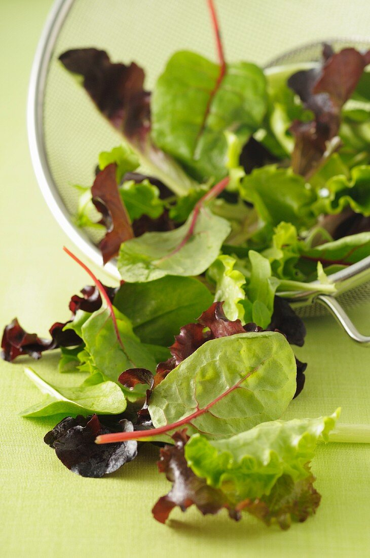 Mixed salad leaves in a sieve