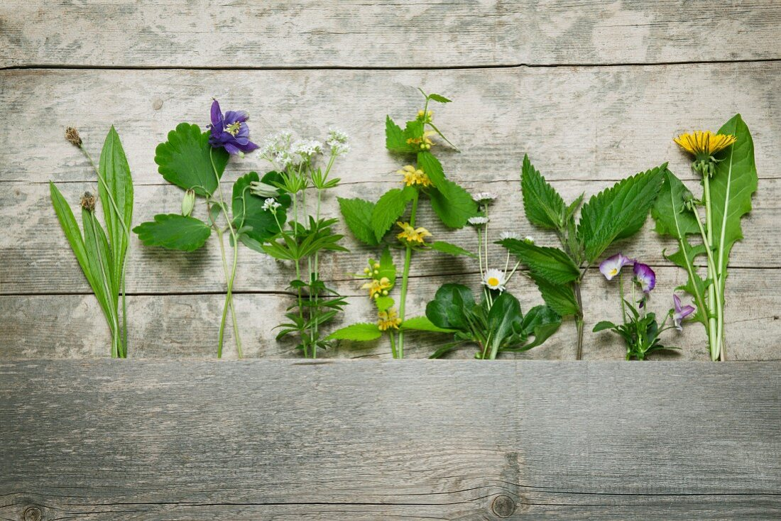Several medicinal and meadow herbs gathered in May on wooden background: ribwort plantain, aquilegia, sweet woodruff, yellow archangel, daisy, nettle, heartsease, dandelion