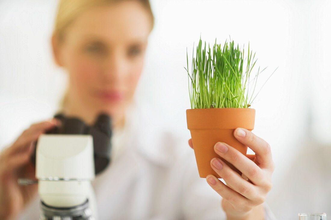 A scientist investigating plants in a lab