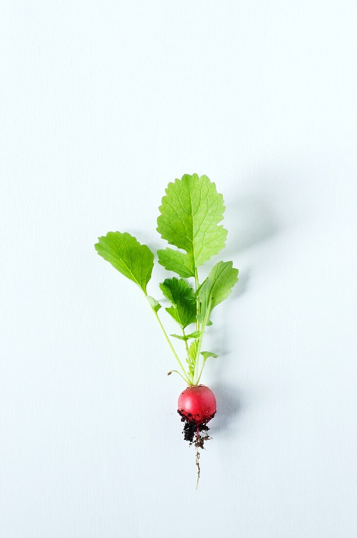 A radish with leaves, root and soil