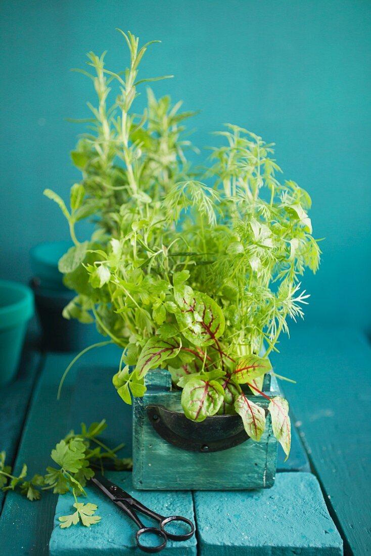 Mixed kitchen herbs