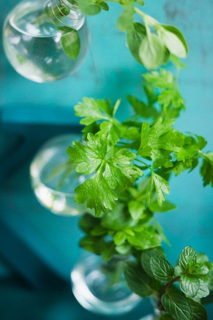 A vase of fresh herbs