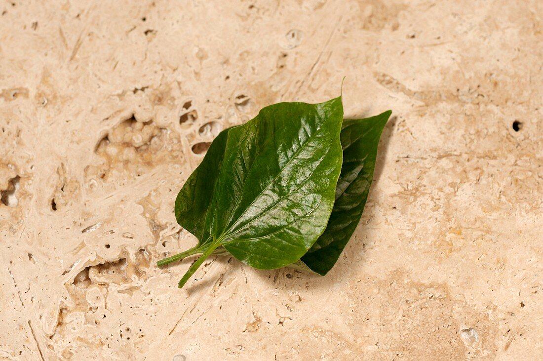 Fresh pepper leaves