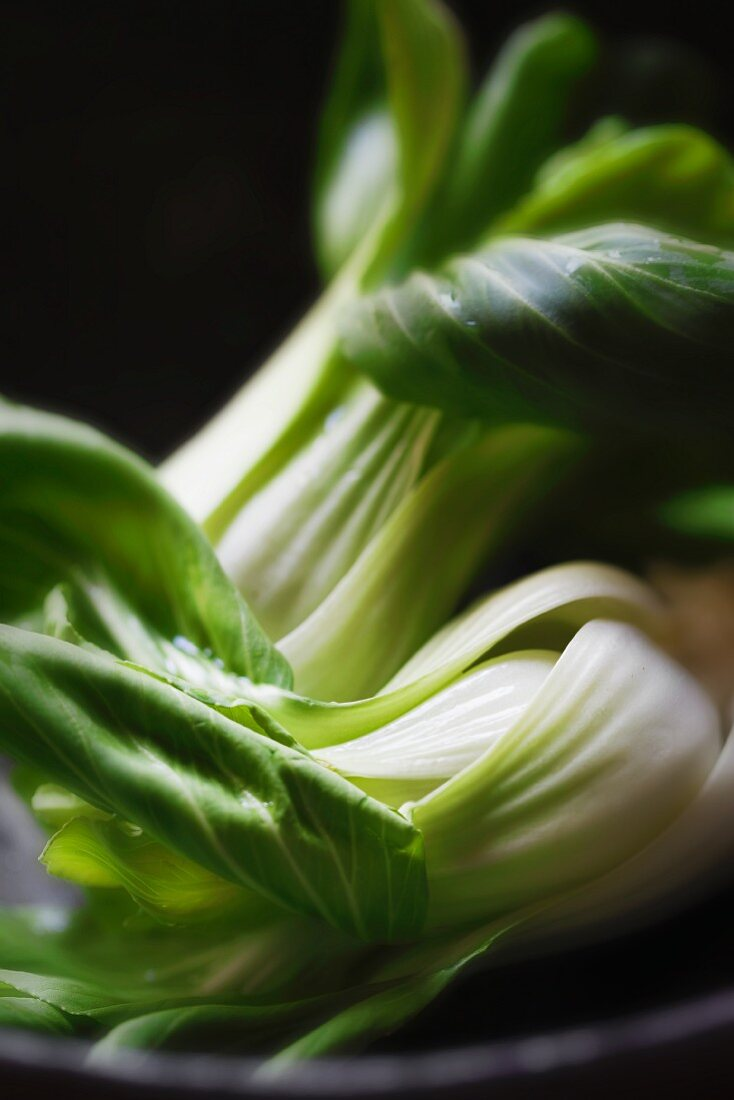 Fresh Baby Bok Choy; Close Up