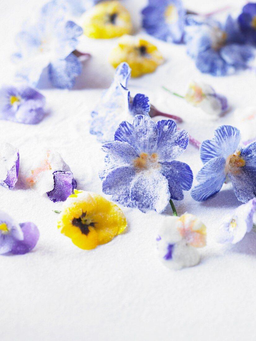 Crystallised violets as cake decorations