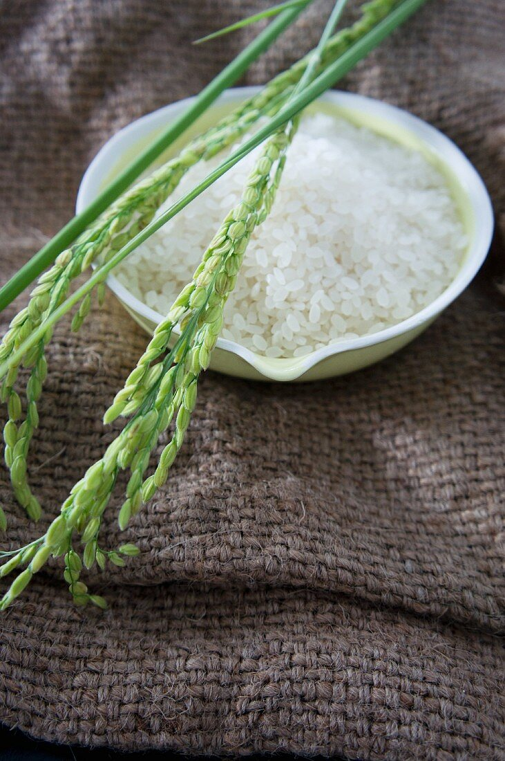 A bowl of rice with ears of rice on a jute sack