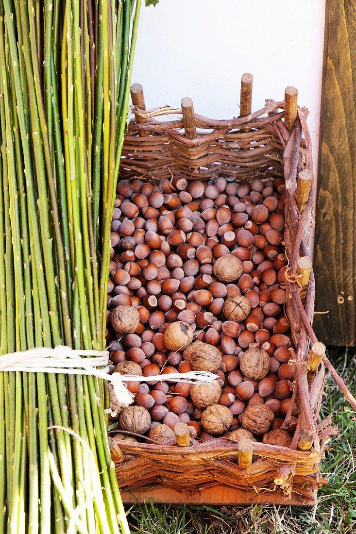 Fresh hazelnuts and walnuts in a wicker basket