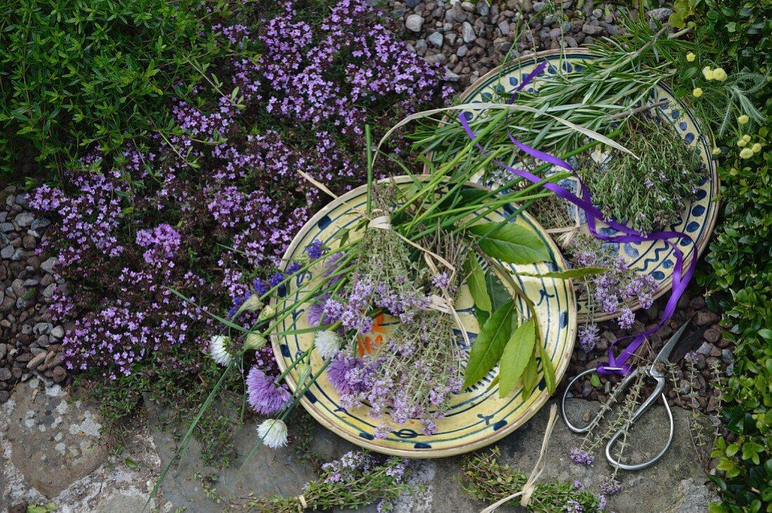 A thyme-themed still life