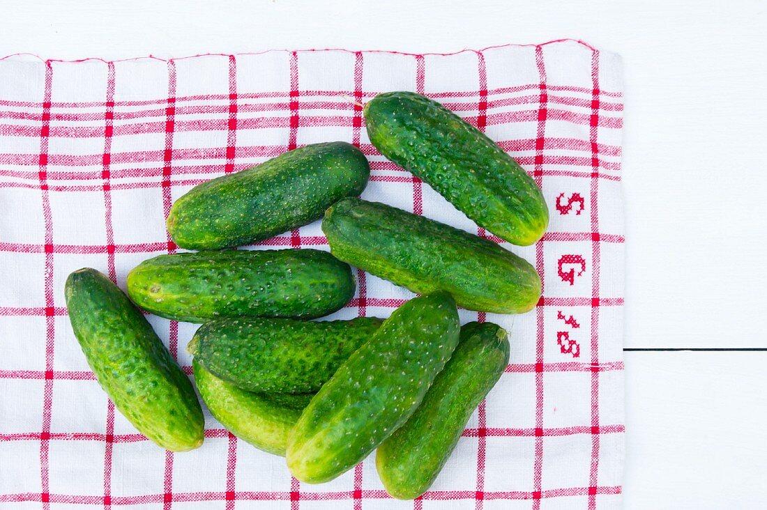 Fresh pickling cucumbers on a tea towel