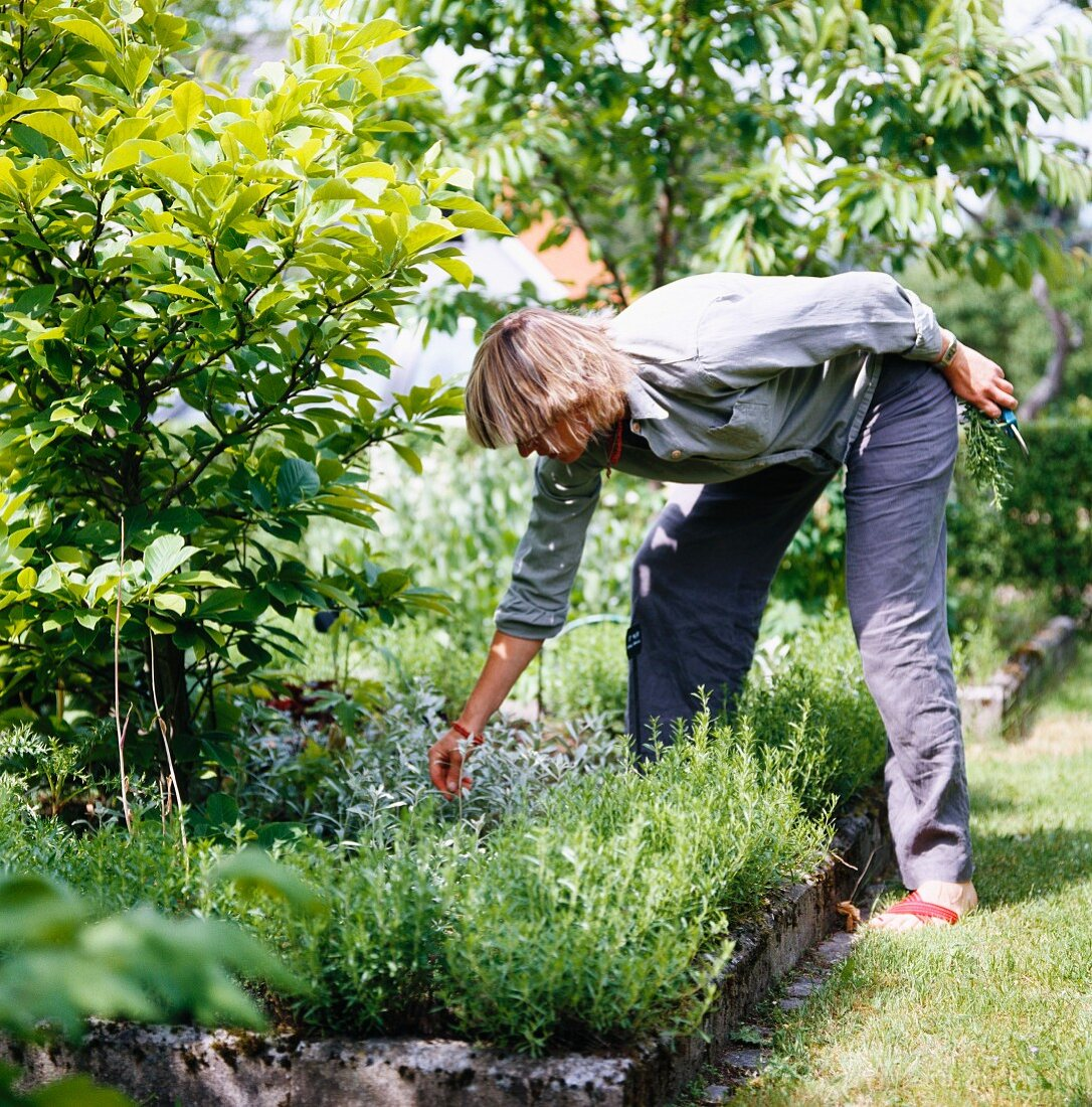 Woman gardening in herb bed