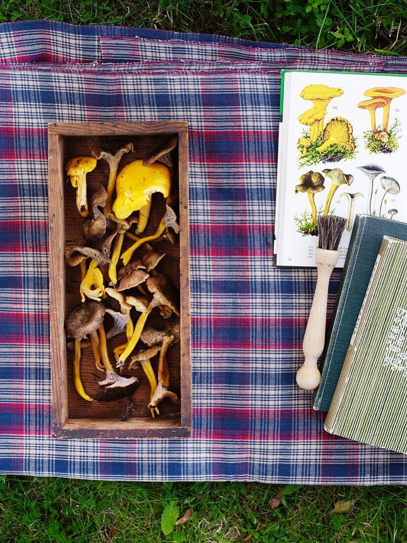 Various mushrooms in box on blanket