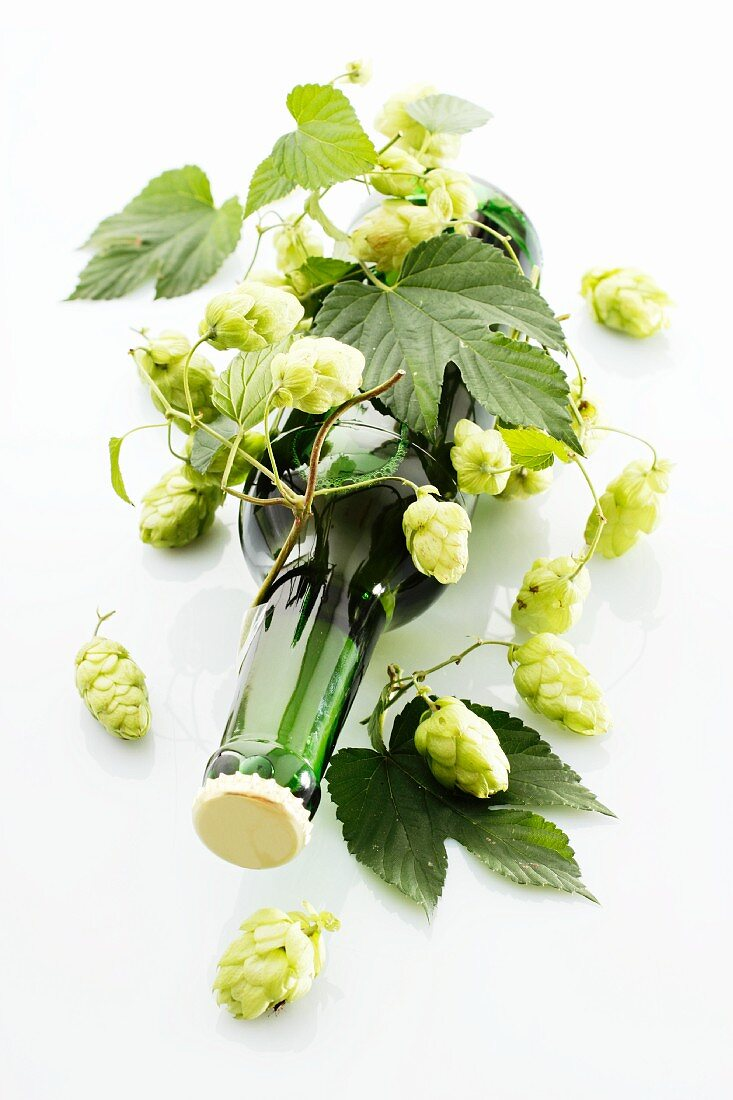 A beer bottle with tendrils of hops