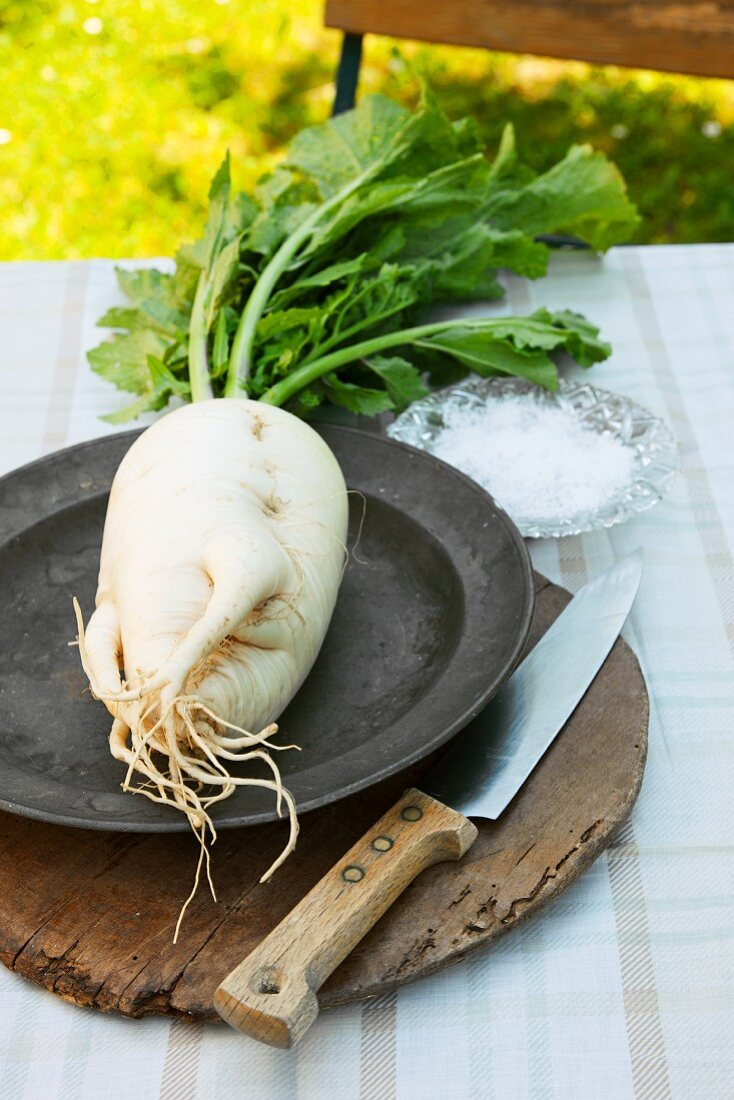 A radish (German beer radish) on an old metal plate on a wooden board, with a knife and salt, on a garden table
