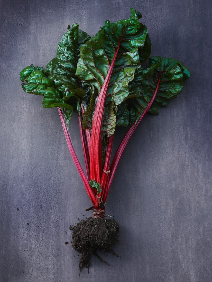 Red chard with roots and soil