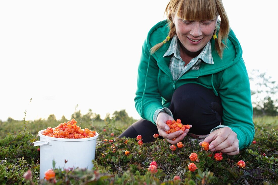 A woman plucking cloudberries in Lapland
