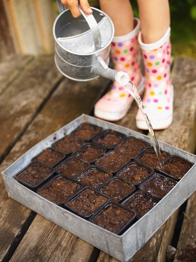 Watering seeds sown in pots