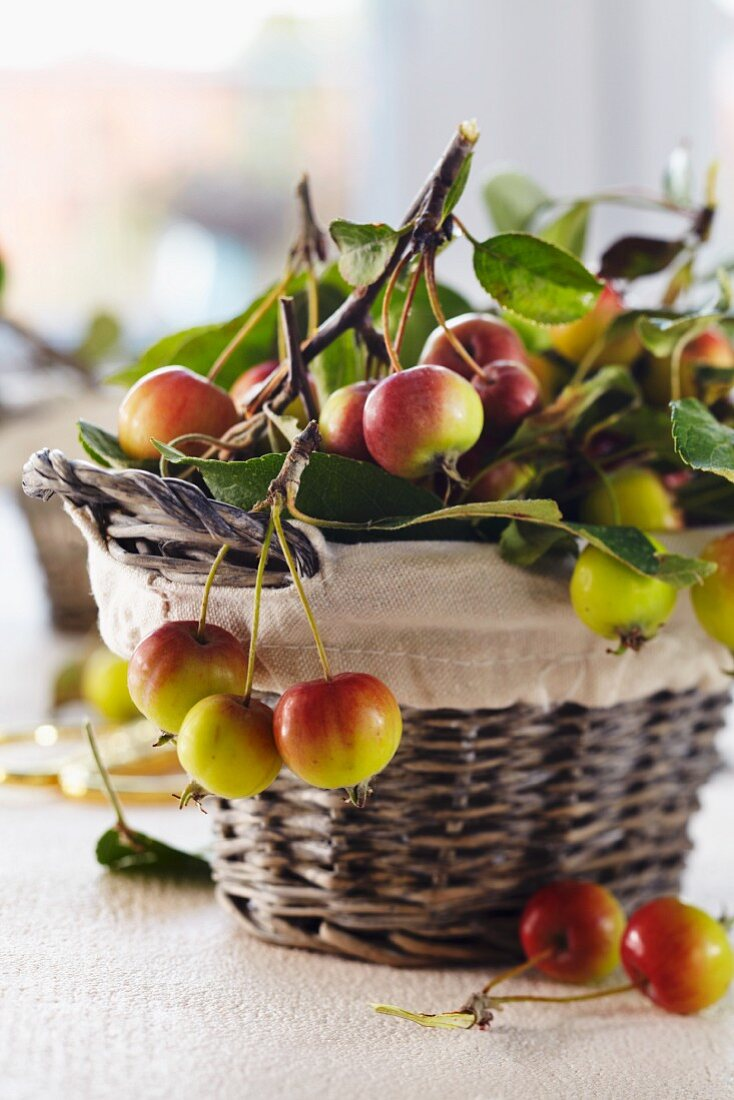 A basket of freshly picked ornamental apples