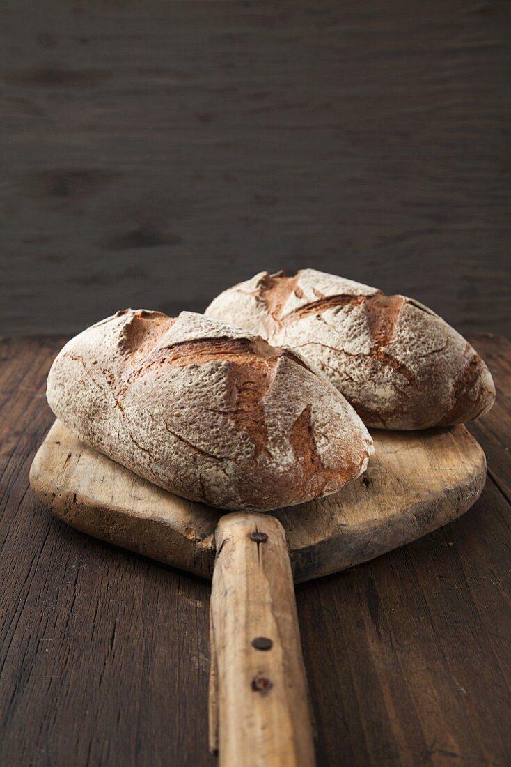 Loaves of bread on a bread peel