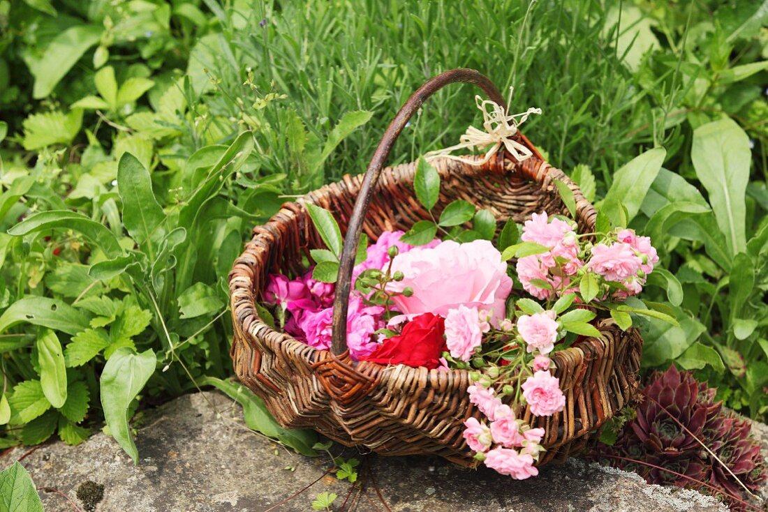 A basket of beautiful roses