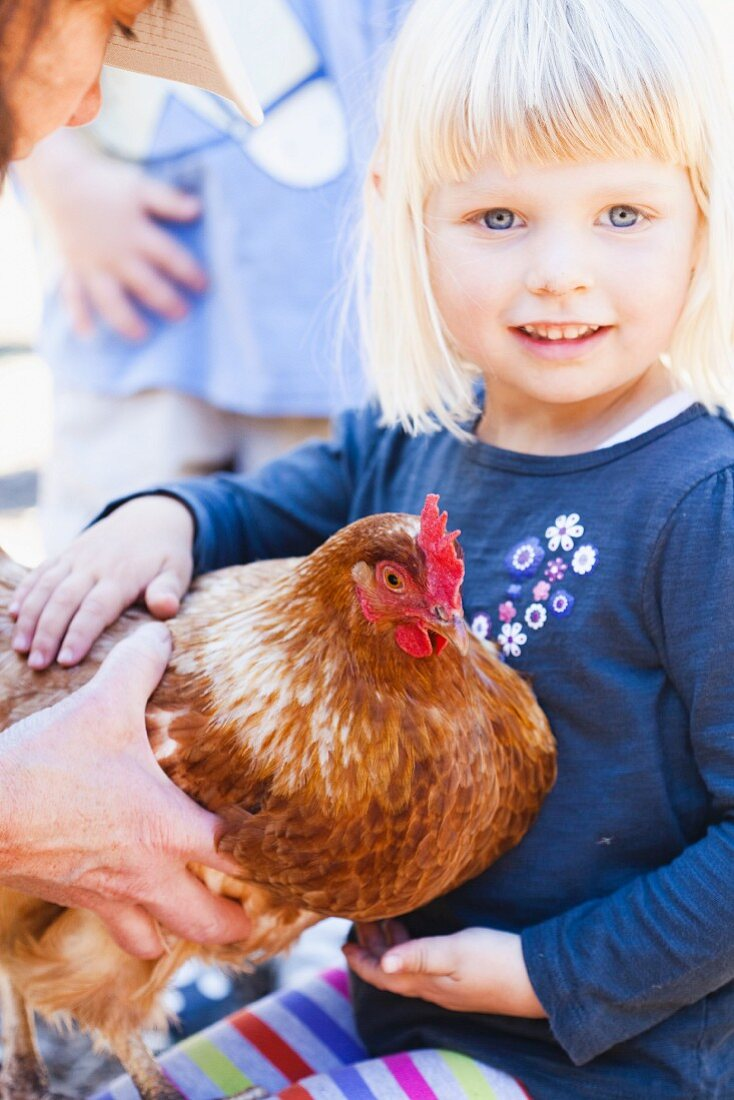 A Little Girl Petting a Chicken