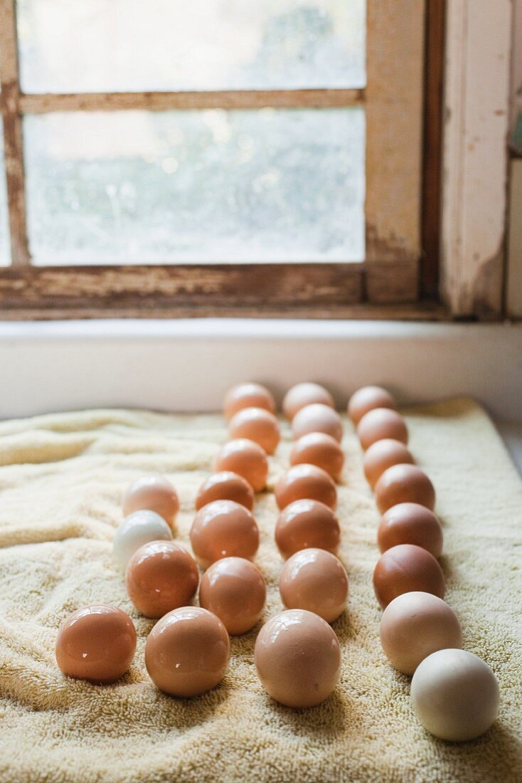 Eggs Set laid out to dry after being washed