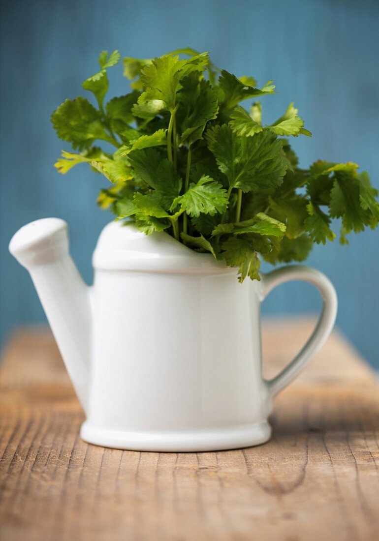 Fresh coriander in a small watering can