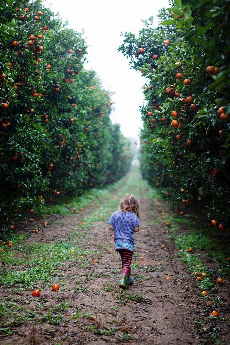 A girl walking through an orange plantation