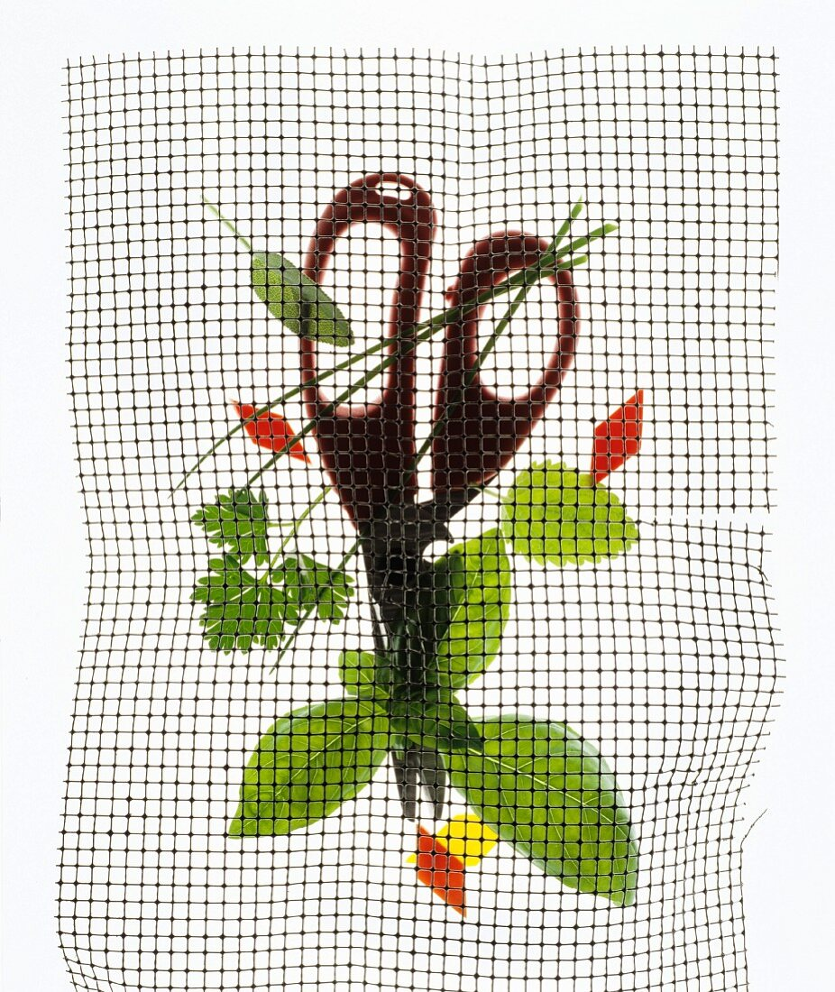 Herbs and herb snippers under wire mesh, backlit
