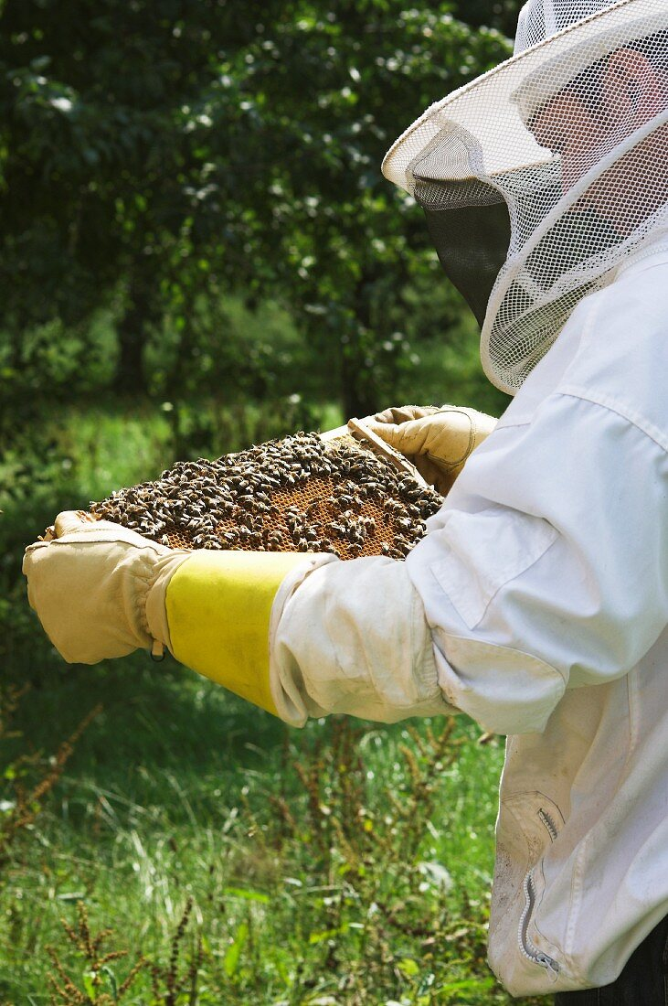 A beekeeper holding a honeycomb covered in bees
