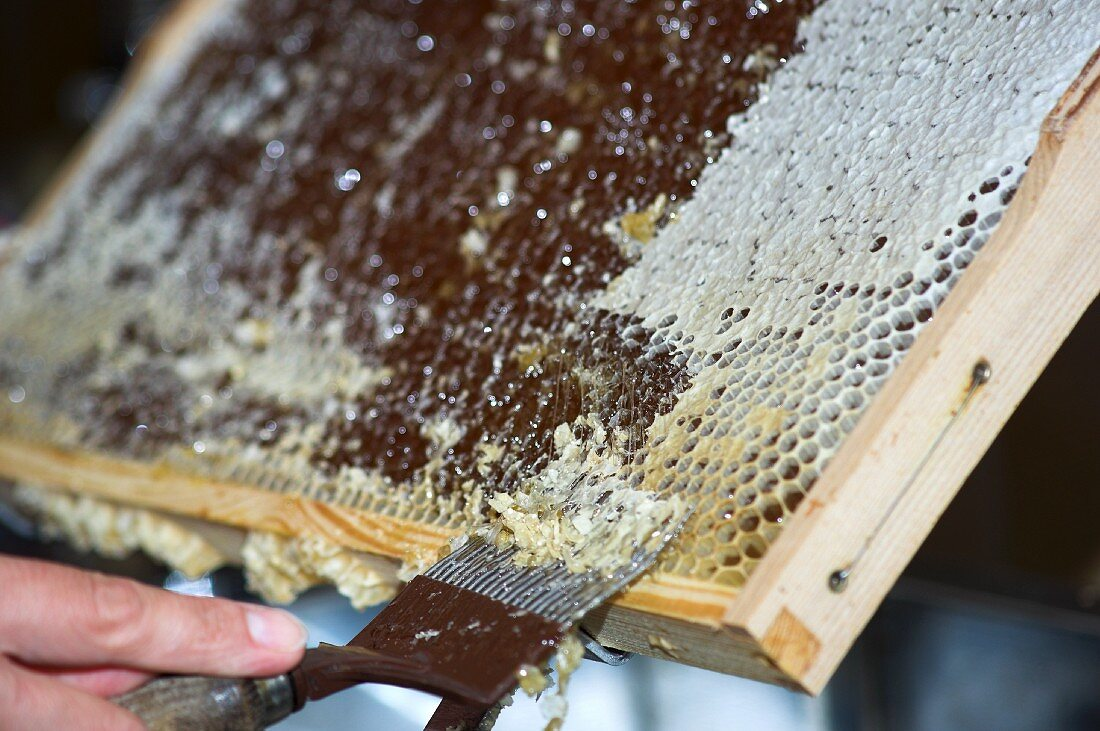 Wax being scraped off the honeycomb, so that the honey can be extracted by spinning
