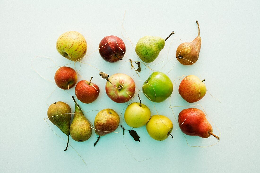 A still life featuring assorted types of apples and pears