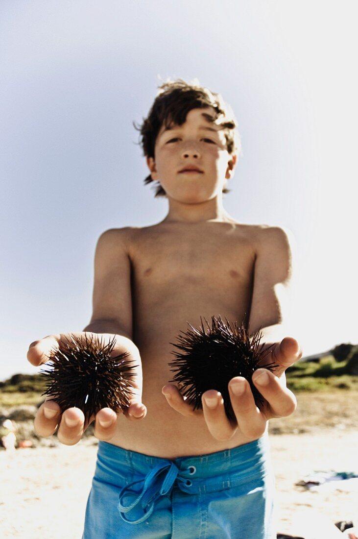 Boy holding sea urchins at beach