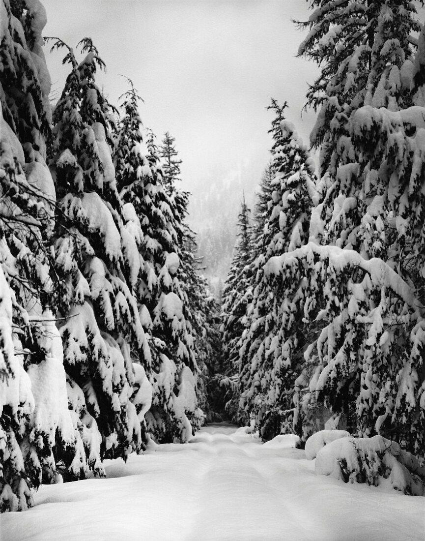 Snowy woodland path