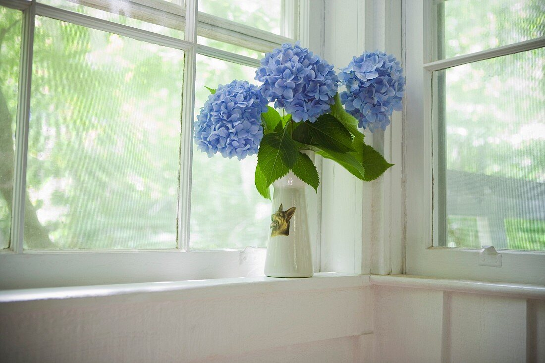 Blue hydrangeas in vase on window sill