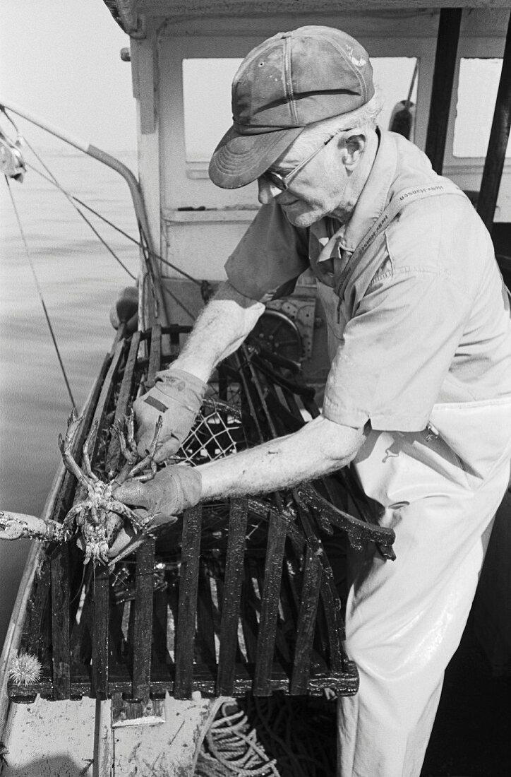 Old Lobsterman Holding Lobster