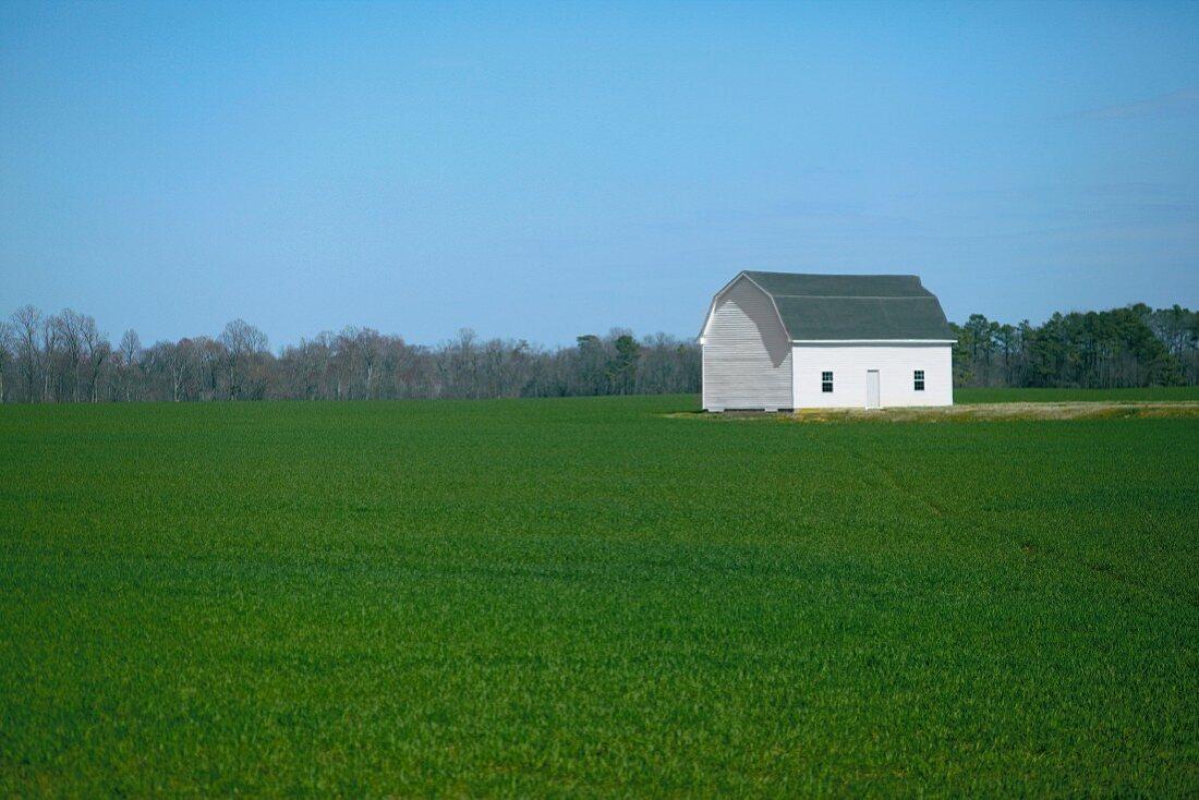 Barn in Green Field, Ocracoke, North Carolina, USA,