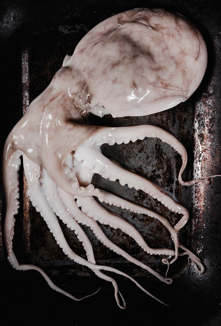 A fresh octopus on a rusty baking tray