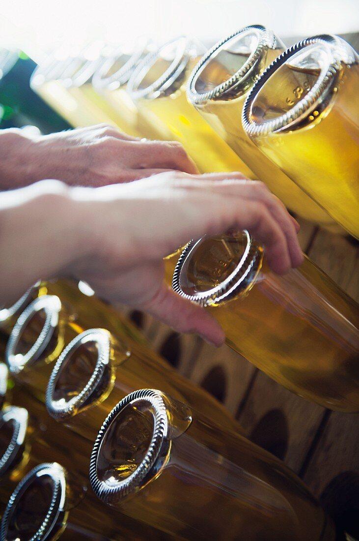 Bottles of sparkling wine and sparkling cider on shaking rack, Aargau