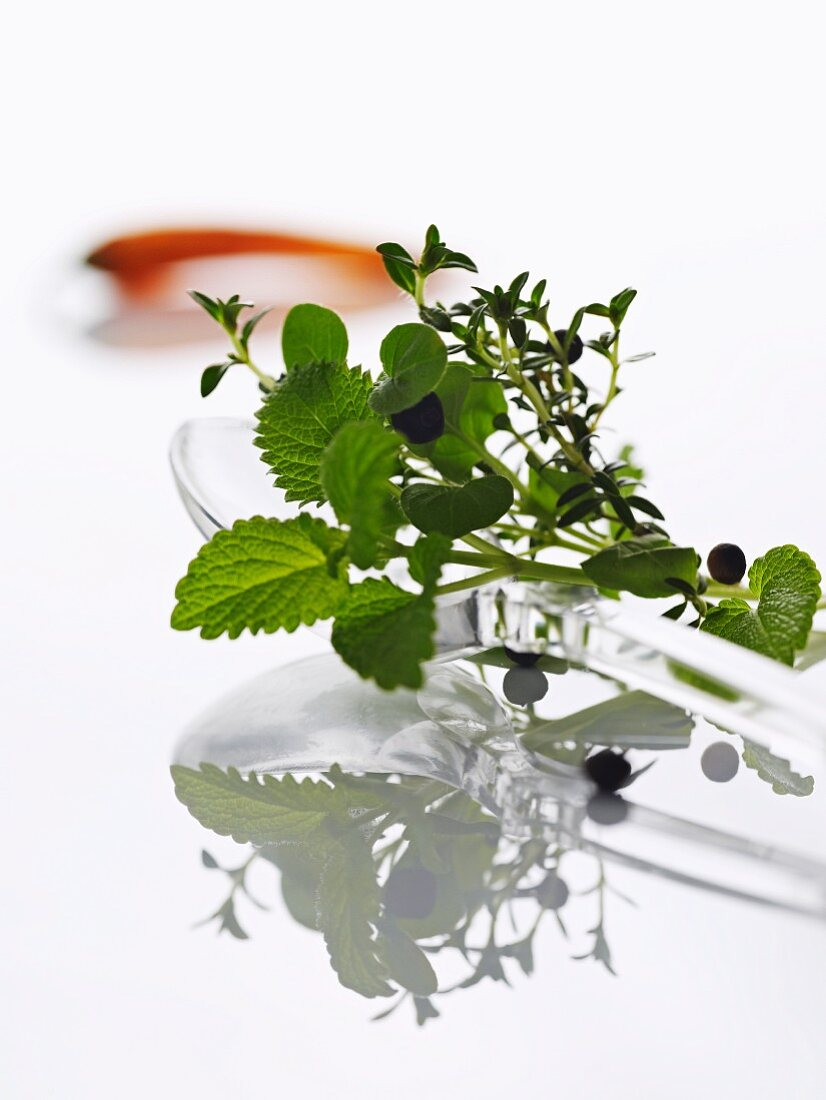 Herbs and a chilli pepper as ingredients for herb oil