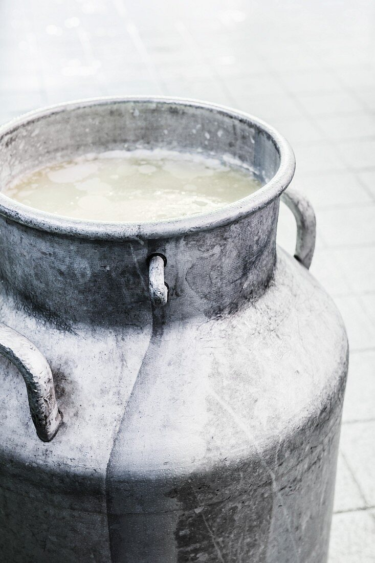 Whey in a churn in a cheese dairy for making cheese