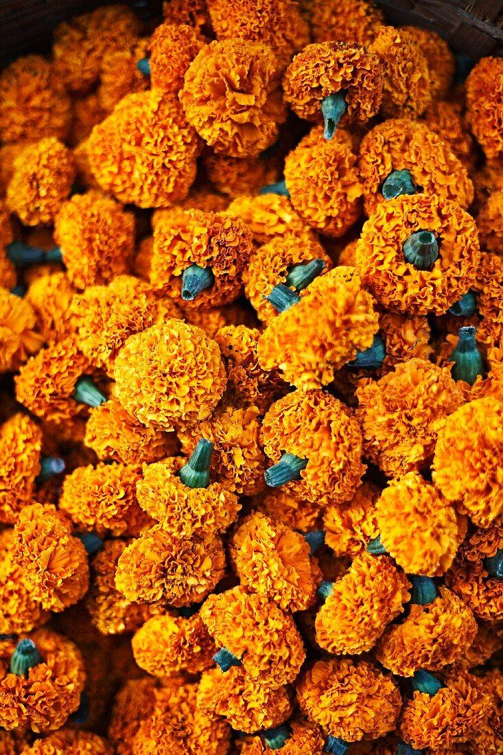 Marigold garlands at a flower market in Mumbai, India
