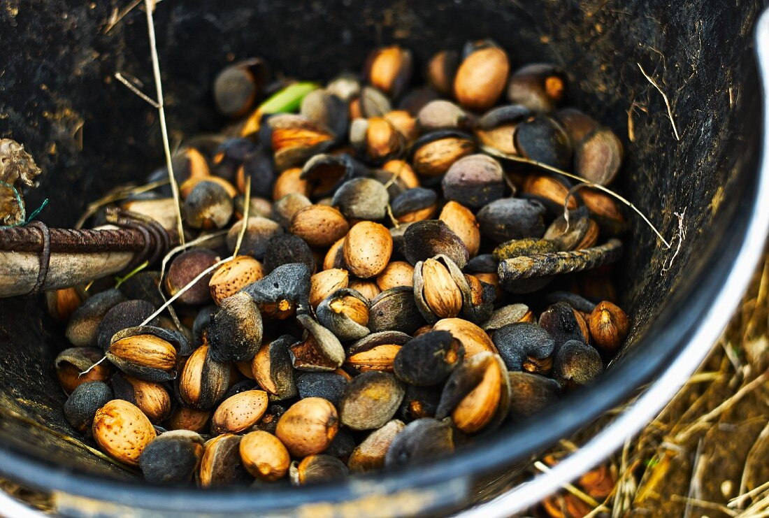 Almonds in a cauldron (Southern Italy)