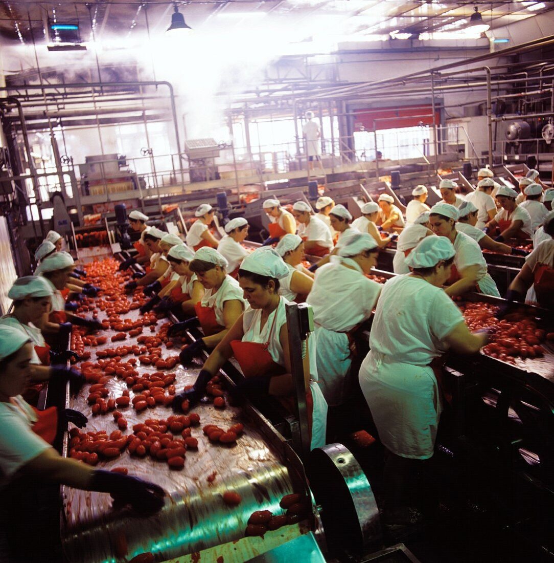 Women working in a tomato factory