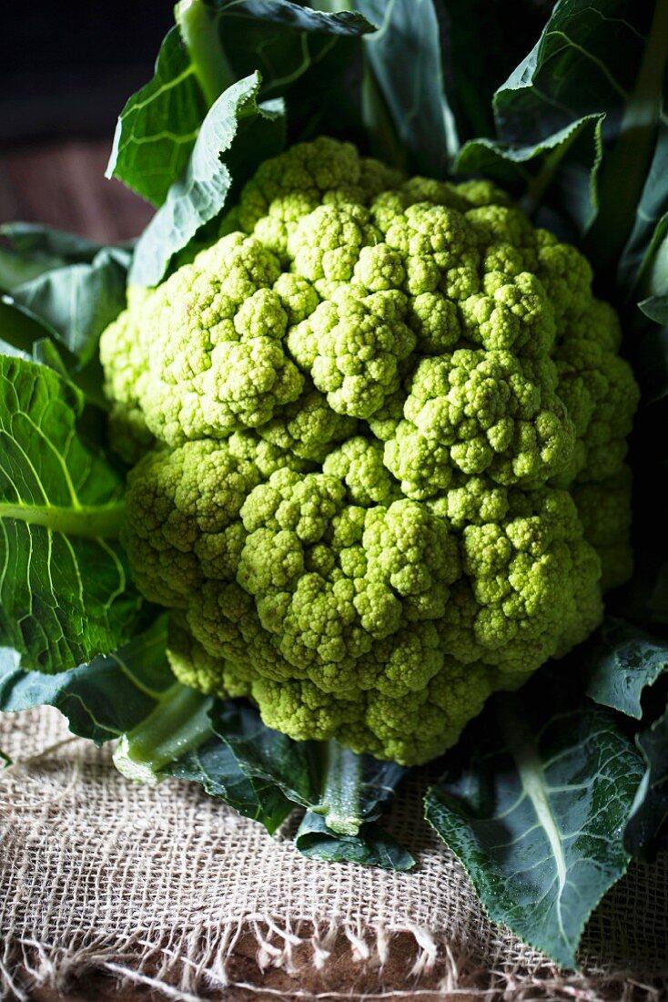 Green cauliflower on a piece of jute