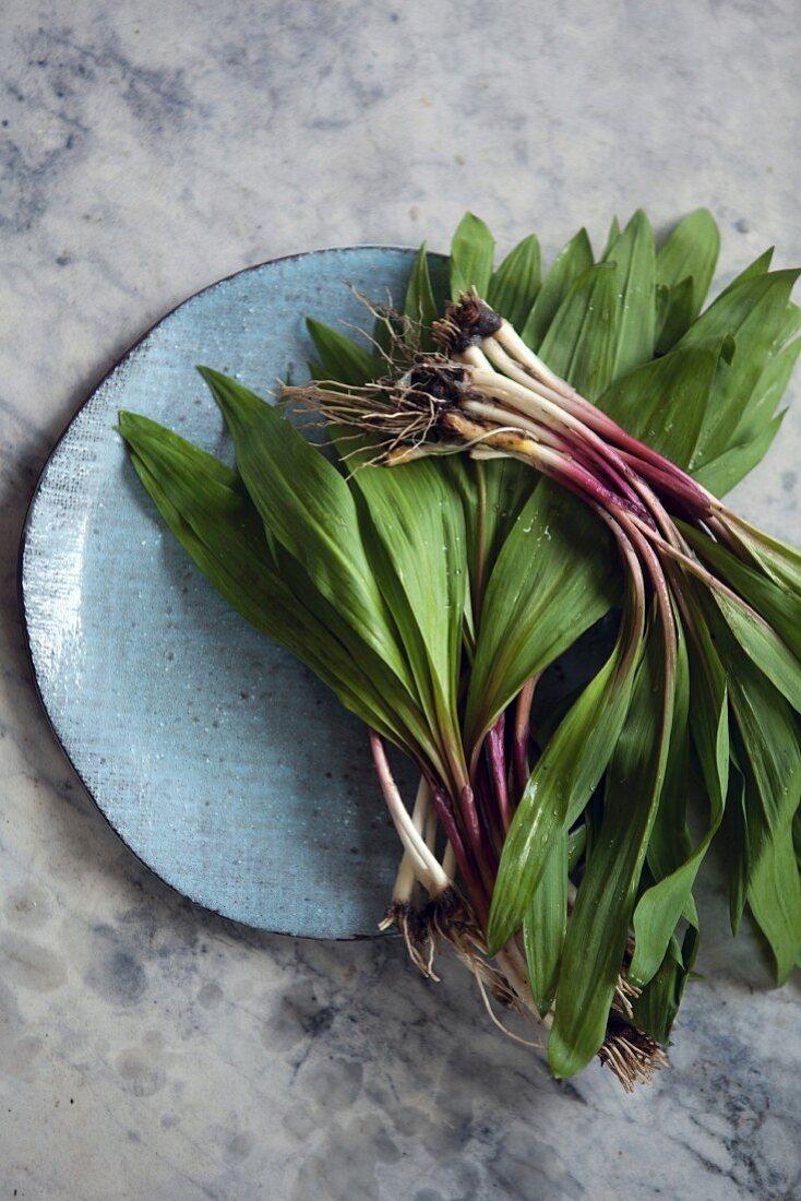 Ramps: wild leek (Allium Trioccum)