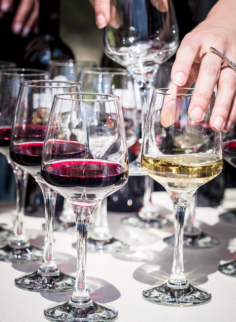 Glasses of red and white wine for a wine tasting session at the annual wine festival in Tbilisi (Georgia)