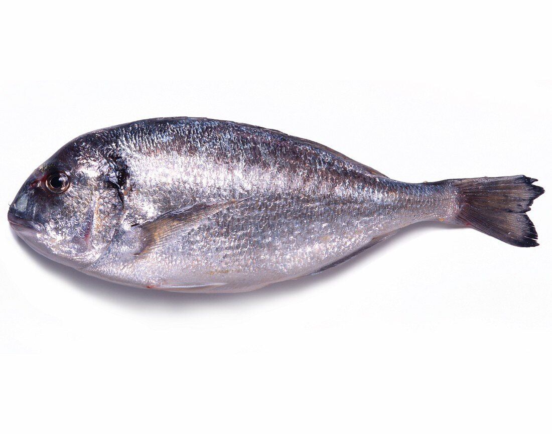 Seabream on a White Background