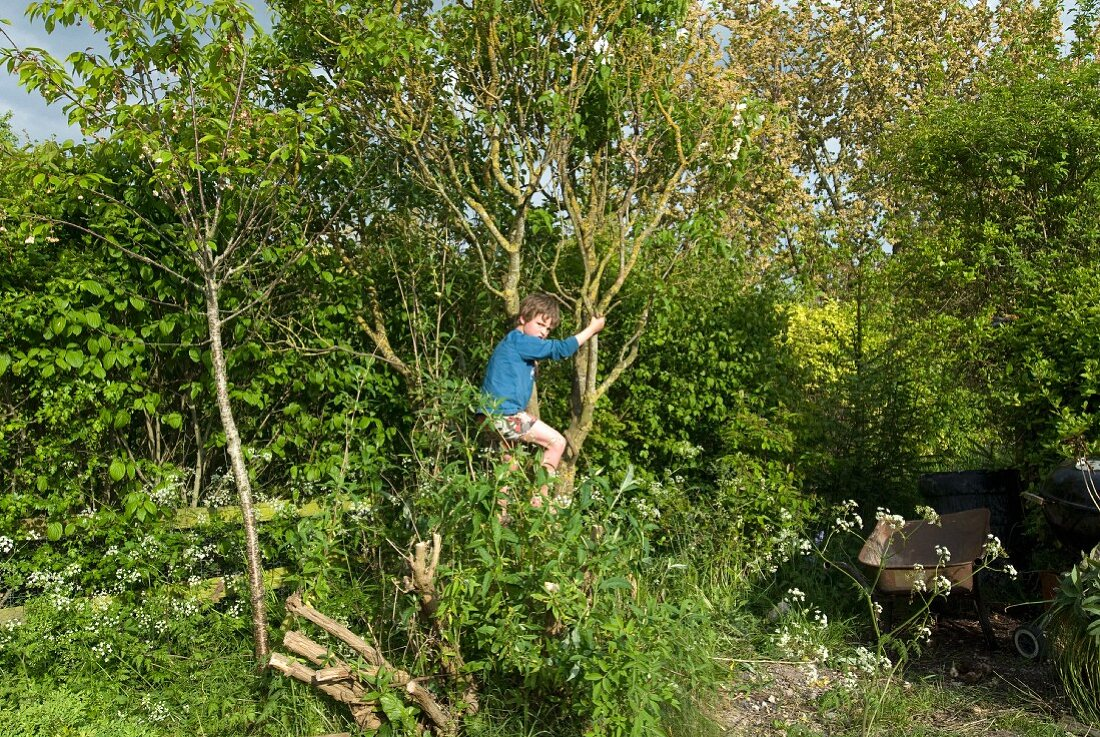 Boy climbing tree in garden