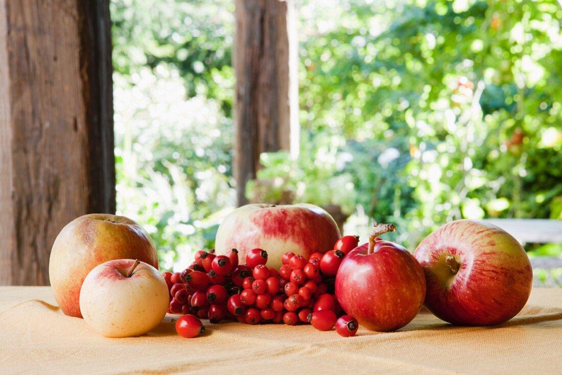 An arrangement of apples, rosehips and rowan berries